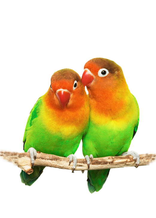 love_birds_copy2